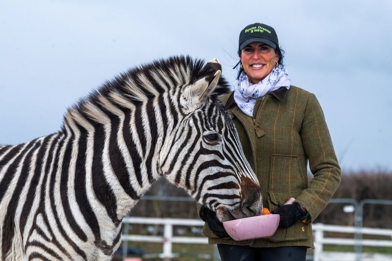 Animal lover keeps adorable pet zebra – and they're best friends with donkey